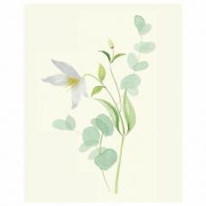 Botanical painting. Вдохновляющий курс рисования акварелью, 105550